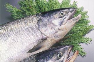 新巻鮭(礼文産)L 半身
