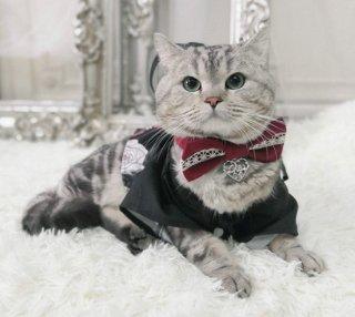 【受注生産】ロリータ NyaNya ネコちゃん用 和柄 羽織のみ 衣装 お洋服 ペット 動物 羽織 着物 薔薇 花柄