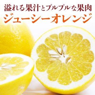 溢れる果汁!ぷるぷるな果肉!飲む様に食べる!ジューシーオレンジ(河内晩柑) 8kg【送料無料】