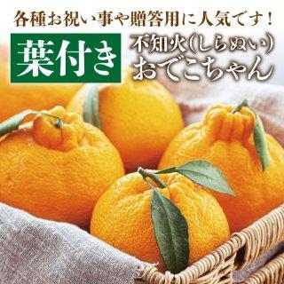 葉付き不知火おでこちゃん3kg(化粧箱入)【送料無料】