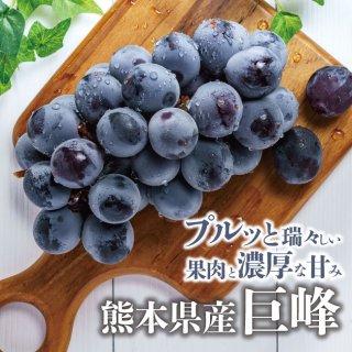 実は大粒!果汁いっぱいの熊本県産 巨峰【送料無料】