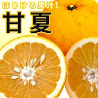 甘夏(あまなつ) 7kg【送料無料!】