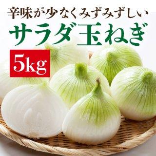サラダ玉ねぎ 5kg【2箱以上購入で送料無料!】