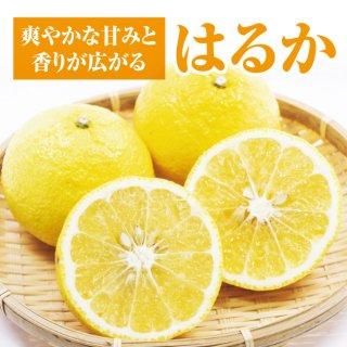 【送料無料】奇跡のフルーツ!はるか 5kg