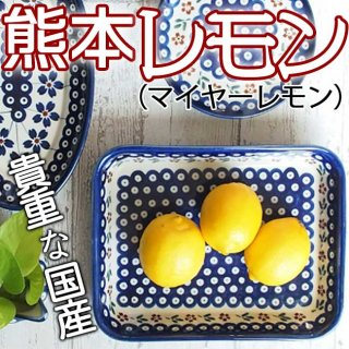 【送料無料】熊本レモン (マイヤーレモン)3kg