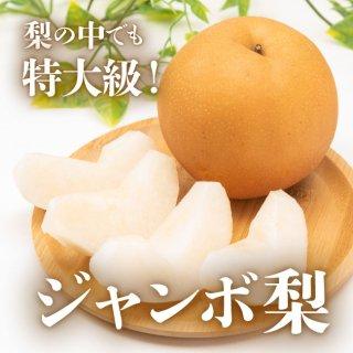 【送料無料】新高梨 4kg