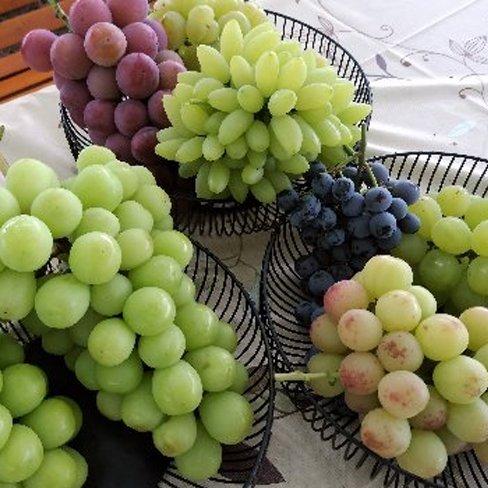 旬の葡萄詰め合わせセット3,2kg・5〜8房