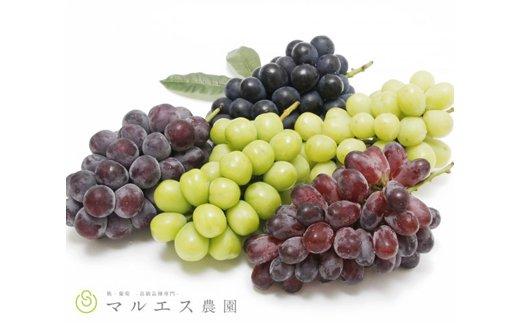 旬の葡萄詰め合わせ 3kg以上 5房〜8房
