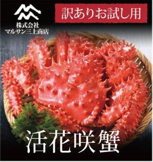 【お試し】 活花咲蟹  活目 700~850g ※数量限定訳あり