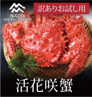 【お試し】 活花咲蟹  活目 900g~1.0kg ※数量限定訳あり