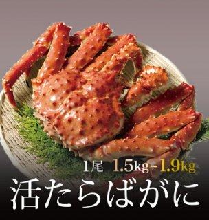 活たらばがに 1.5~1.9kg