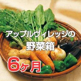 LTVアップルヴィレッジの野菜箱6ヶ月