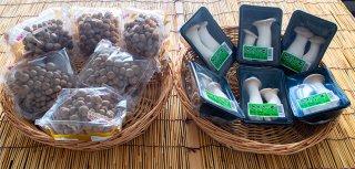 【産地直送】朝採りきのこセット(約1.5kg)2種類12個入り・(送料込み)