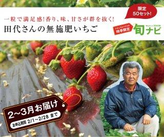 田代さんの無施肥いちご限定50セット 送料込み【S-1】