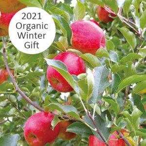 平井さんの季節のりんご詰め合わせセット 5kg【送料込み】 15001