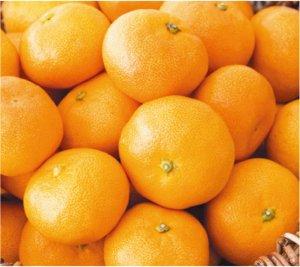 佐藤さんの有機栽培みかん10kg 47002 【送料込み】早割5%オフ!11月30日まで
