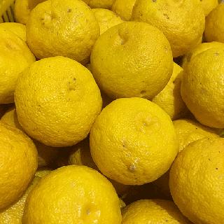 農薬不使用柚子-土佐山産 柚子- [500gから(3個〜)]