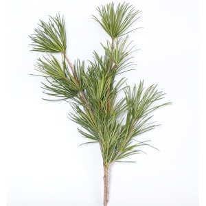 高野槇(こうやまき・コウヤマキ)の切り枝 60cm