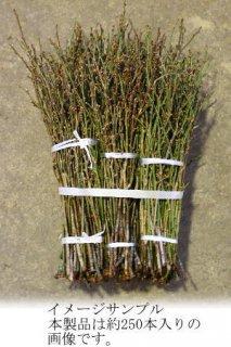 [花材][生花][切花][白][正月] 梅の花 コクセン 花梅 小枝 50cm程度 12月10日ごろからの出荷です。