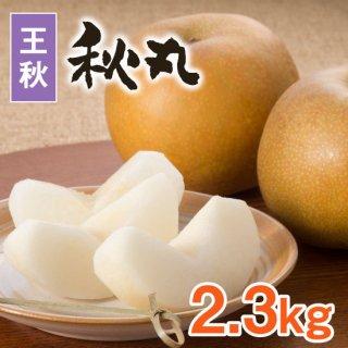 【王秋】秋丸2.3kg