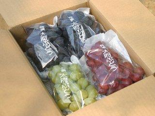 露地栽培ぶどう:園主特選ぶどう詰め合わせ 4~5房(約1,7~1,9kg)