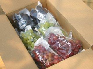 ハウス栽培ぶどう:園主特選ぶどう詰め合わせ 5~6房(約2,2~2,9kg)