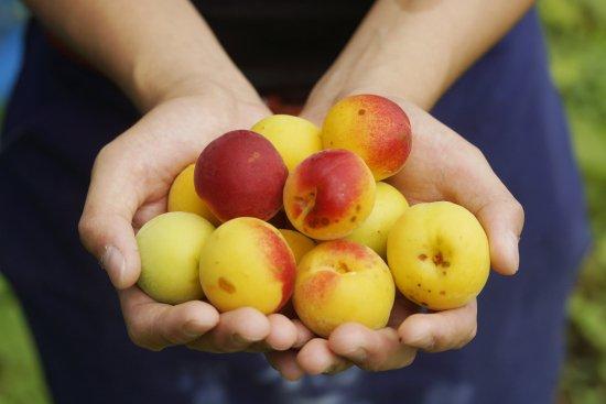 ☆夏限定品☆和歌山県でオーガニックの梅を作ってる深見梅店様の完熟梅を使用して栄養士さんが無添加梅ジャムをつくりました。