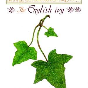 The English Ivy<br>(プリント3枚・テキスト付)