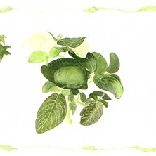 Green Plant No.1<br>(プリントのみ4枚)