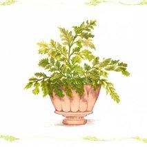Green Plants No.2<br>(プリントのみ4枚)