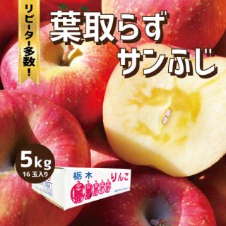 【産地直送りんご】 サンふじ 5キロ(1段箱)16玉〜18玉(M玉)