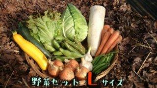 [送料込み]野菜セット ファミリーサイズ