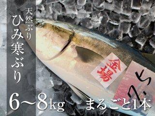ひみ寒ぶり 6〜8kg まるごと1本
