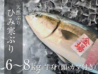 ひみ寒ぶり 6〜8kg 半身(頭・カマ付き)