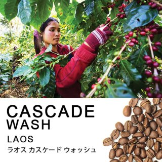 【アジア・ラオス】カスケード ウォッシュ (100g)