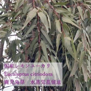 無農薬国産レモンユーカリ(ユーカリシトリオドラ)精油5ml他