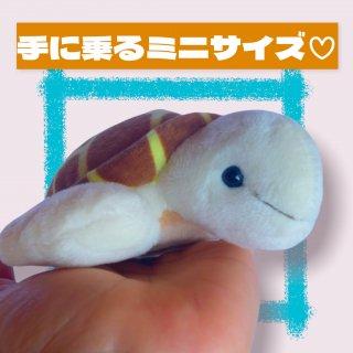 《テイクオフ》ウミガメ S