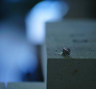 白詰草のピアス-clover/trifolium repens  pierce- (silver925・シルバー)