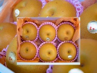 セラ産 豊水梨 6玉
