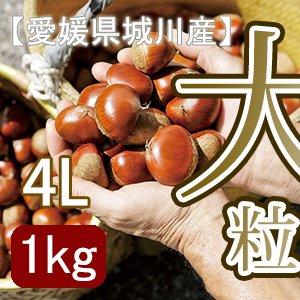 秋だけの限定】愛媛県城川産の最大級生栗[4Lサイズ1kg入]
