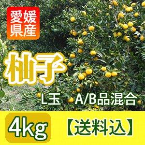 愛媛県産A/B級混合生柚子【4�】