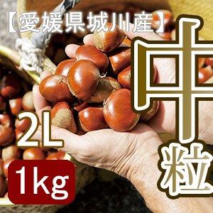 【秋だけの限定】愛媛県城川産の大粒生栗[2Lサイズ1kg入]