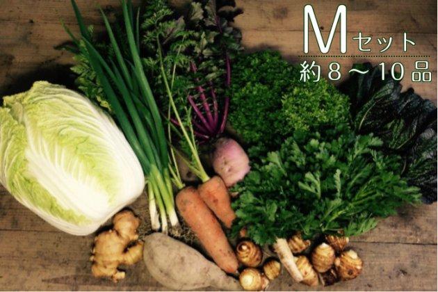 【あまがえる農園の野菜セットM】約8〜10品/送料無料/栽培期間中農薬・化学肥料不使用