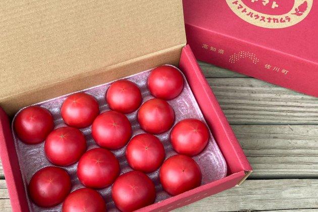 【佐川町産・高糖度フルーツトマト】約1.6kg/トマトハウスナカムラ