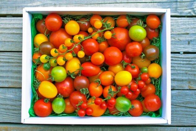 【佐川町産・カラフルトマトの宝石箱】約1kg/約10種類のトマトの詰め合わせ/トマトハウスナカムラ