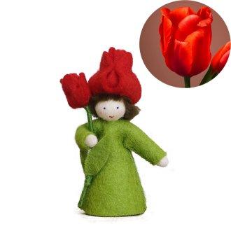 赤いチューリップ ホワイト  Ambrosius fairy/アンブロシウス フェアリー