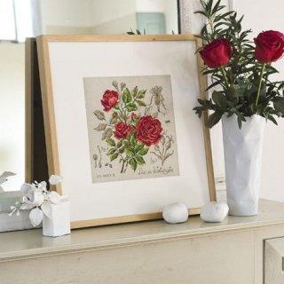 Etude a la rose (Duc de Wellington) クロスステッチキット