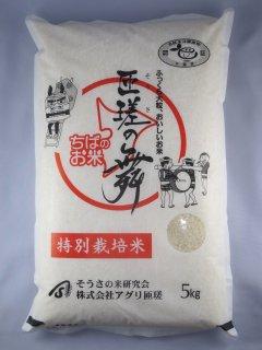千葉県匝瑳市産 ふさこがね「匝瑳の舞」(そうさのまい)