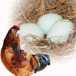 アローカナ 幸せの青い卵 6個入り