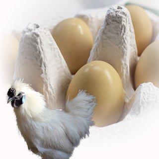 鳥骨鶏(ウコッケイ)12個入り